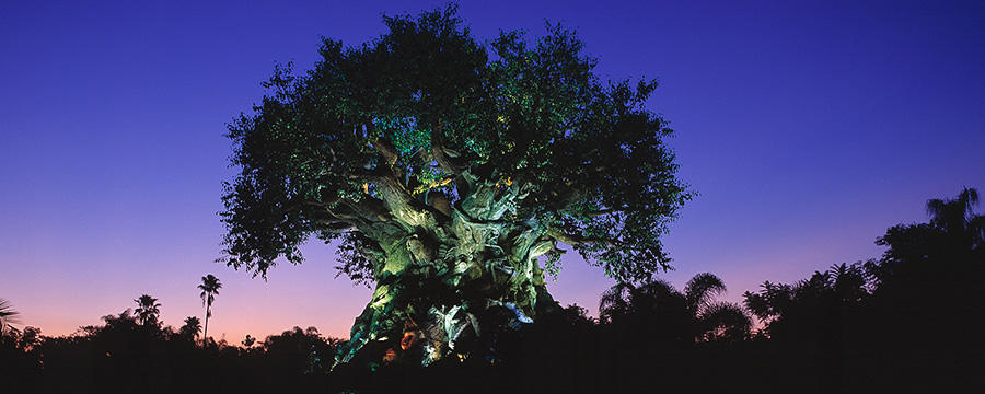 Additional Details About The Jungle Book Dining Packages