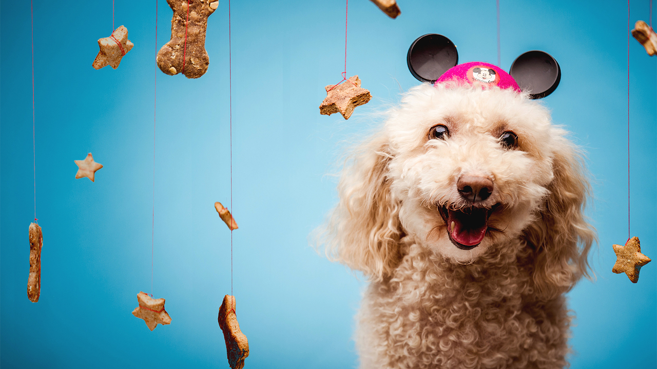 Celebrate National Dog Biscuit Appreciation Day Feb. 23 With Dog Treat Recipes from Disney Chefs