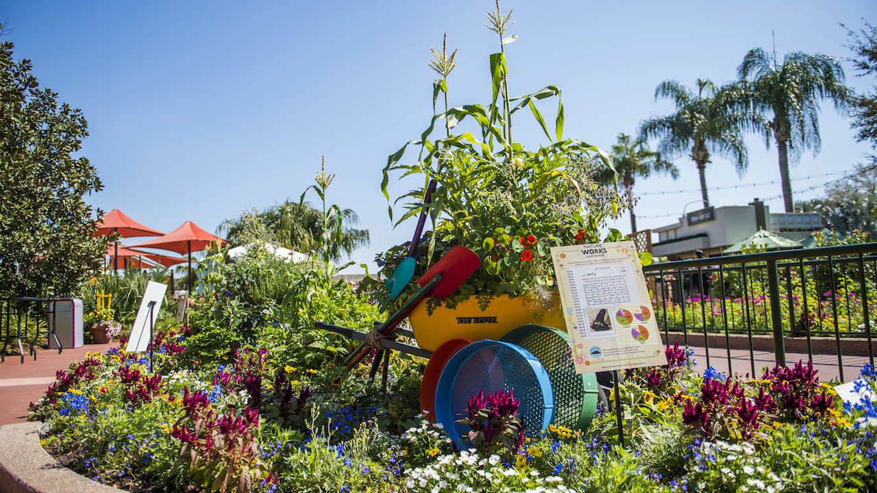 Kumquats and Papayas in a Container Garden? Ideas for Your Own Urban Farm at Epcot International Flower & Garden Festival