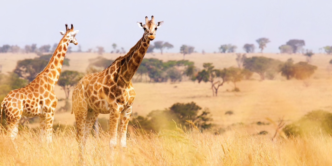 Adventures by Disney Announces Special South Africa Departure Hosted by Joe Rohde and Dr. Mark Penning